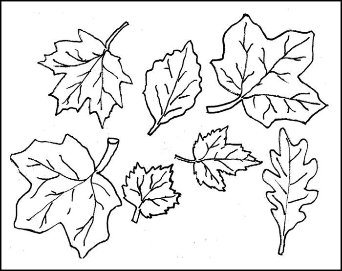 Doc Leaf Template   Best Ideas About Leaf Template