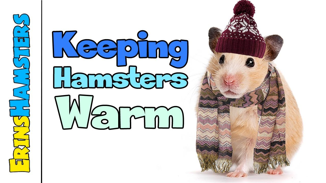Keeping Hamsters Warm in Winter. VERY IMPORTANT TO KNOW ...