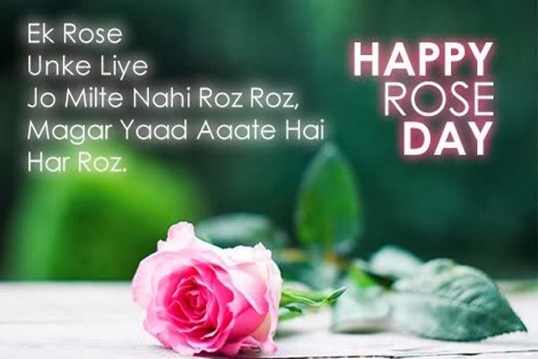 Happy Rose Day Wallpapers Greetings 1 Rose Day Shayari Rose