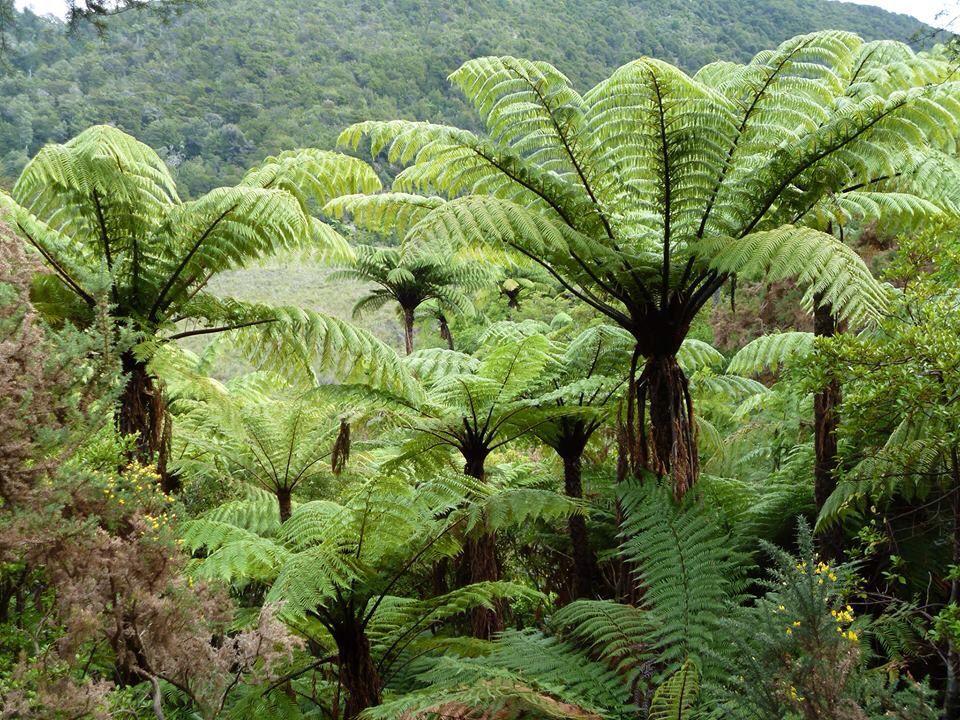 New Zeland