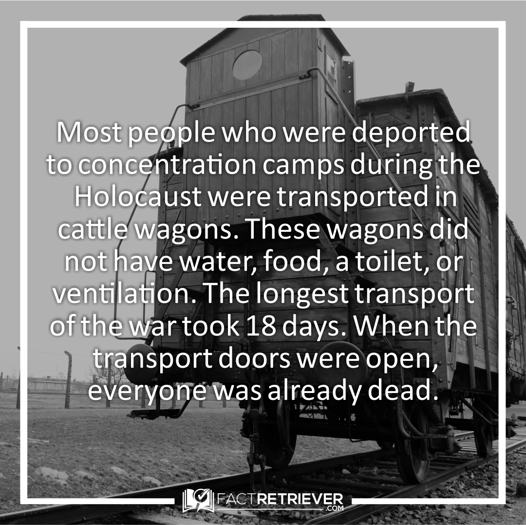 Holocaust Survivor Quotes Prisoners Were Treated Worse Than Cattle Psychosis  Pinterest