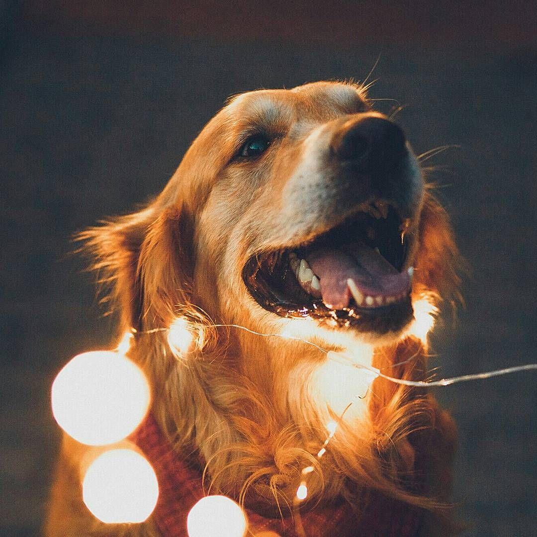 Вообще-то мне больше хотелось бы иметь собаку, чем жену...🙃🐕 Малыш и Карлсон  Один из наших любимых аккаунтов @yulia_and_maximus и самая жизнерадостная фотосессия с #гирляндаНить🙆👍