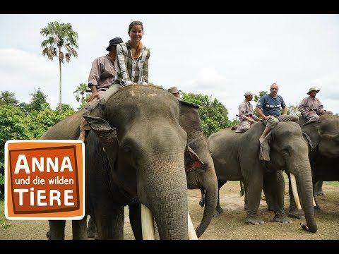 Unterwegs Mit Der Elefantenpolizei Doku Reportage Fur Kinder