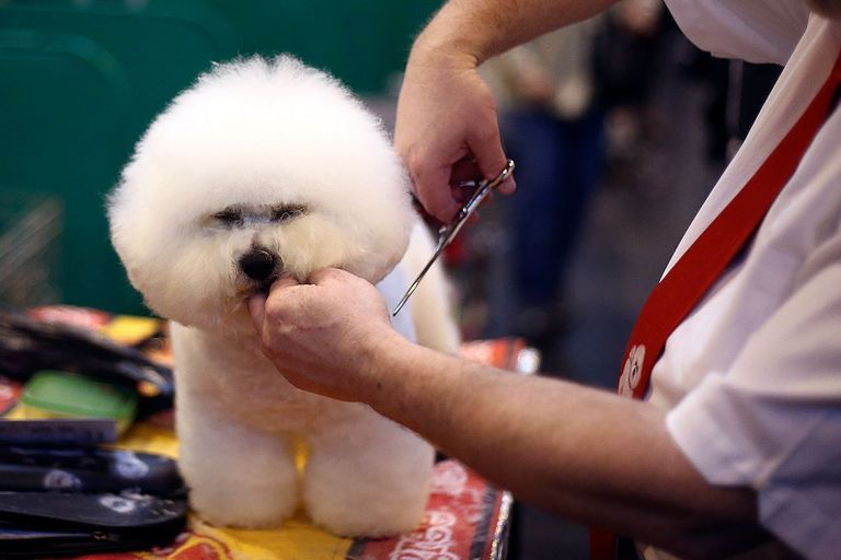 How To Start A Mobile Dog Grooming Salon Grooming Salon