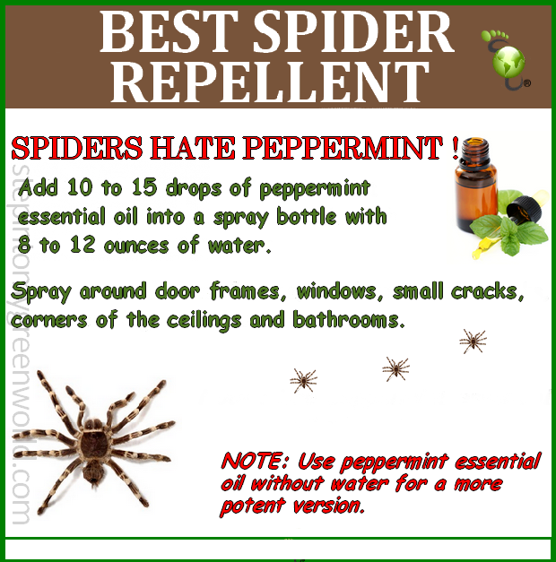 Spider Be Gone Spiders Repellent Repellent Natural Spider