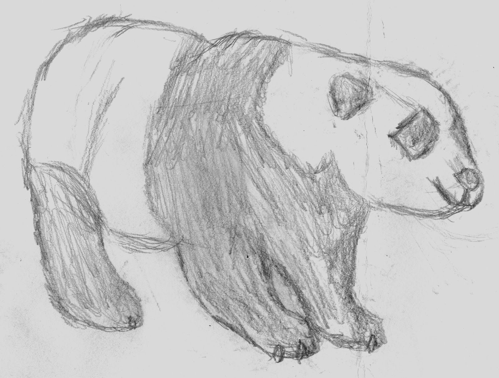 Easy Sketches Of Animals Viewing Gallery Charcoal