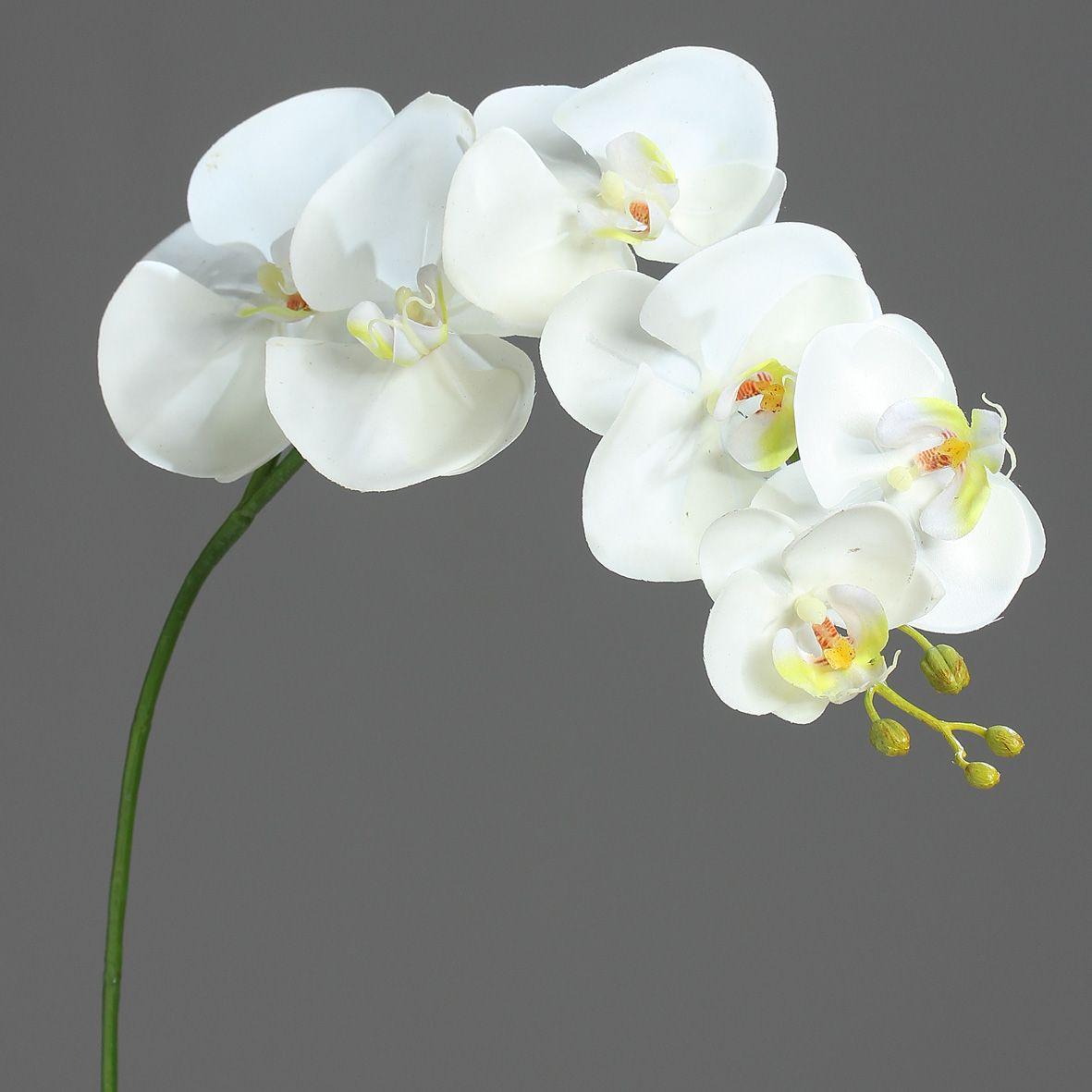 Orchidees Phalaenopsis Creme 6 Fleurons 81cm Infos Et Dimensions Orchidee Phalaenopsis Orchidee Orchidees Artificielles