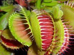 The Coolest Plants In The Amazon Rainforest Carnivorous Plants