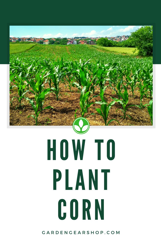 How To Plant Corn (Garden Guide) #gardengearshop #garden # ...