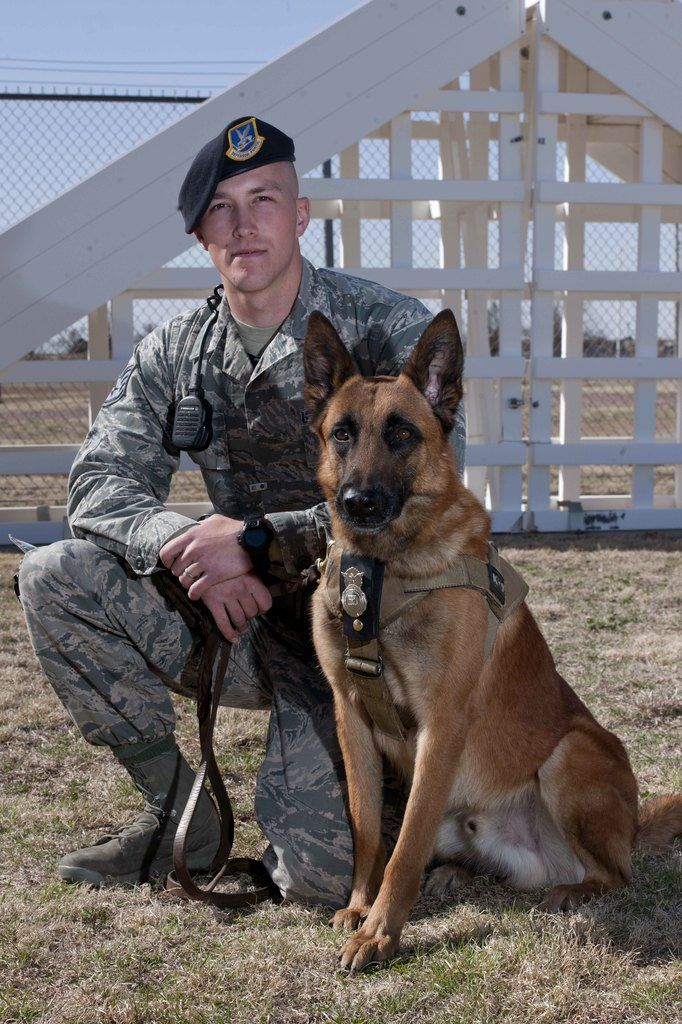 Tillman A Military Working Dog Sits With U S Air Force Staff