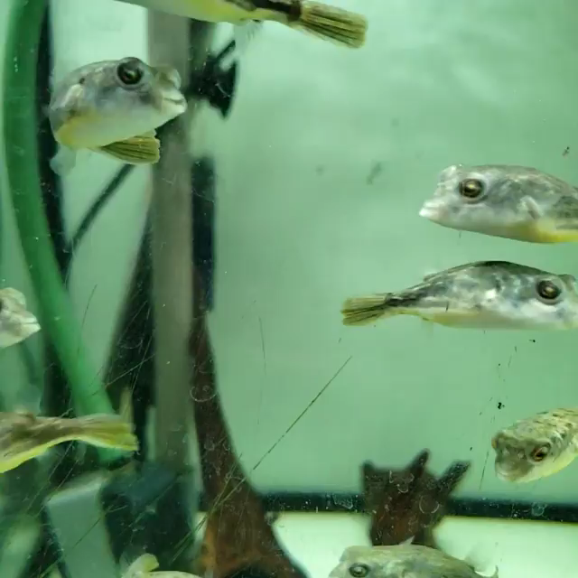 All Credit To Castledawnaquatics Instagram On Instagram As The