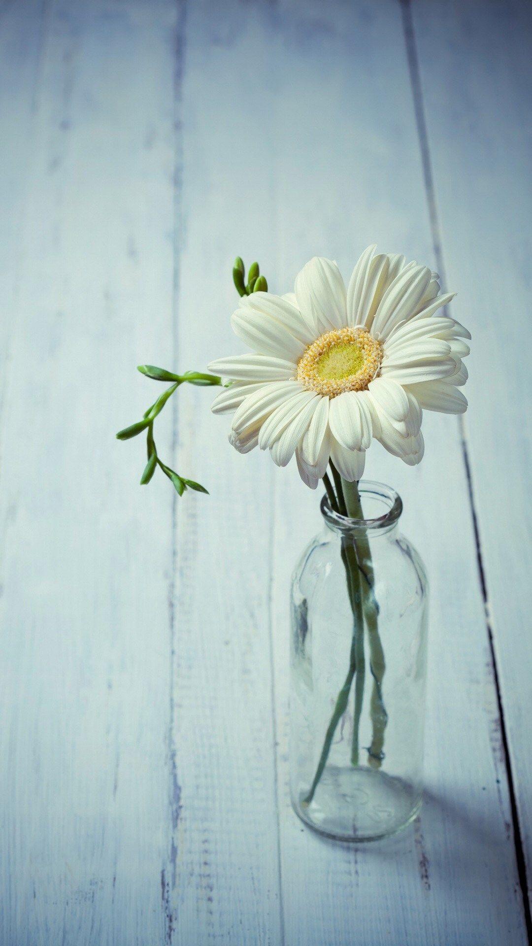 Aesthetic Beauty Daisy Vase iPhone 6 plus wallpaper