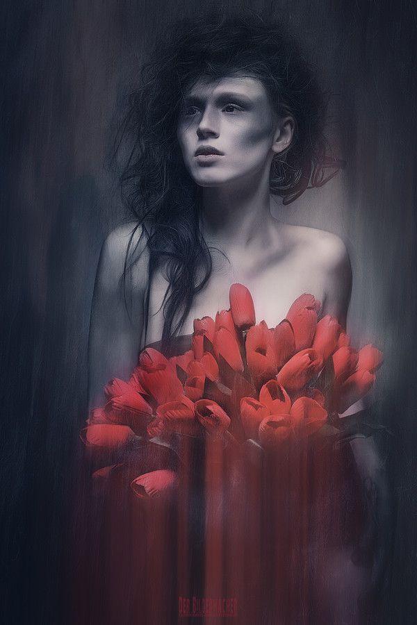 Markus Grimm rote tulpen by markus grimm der bildermacher on 500px bilder