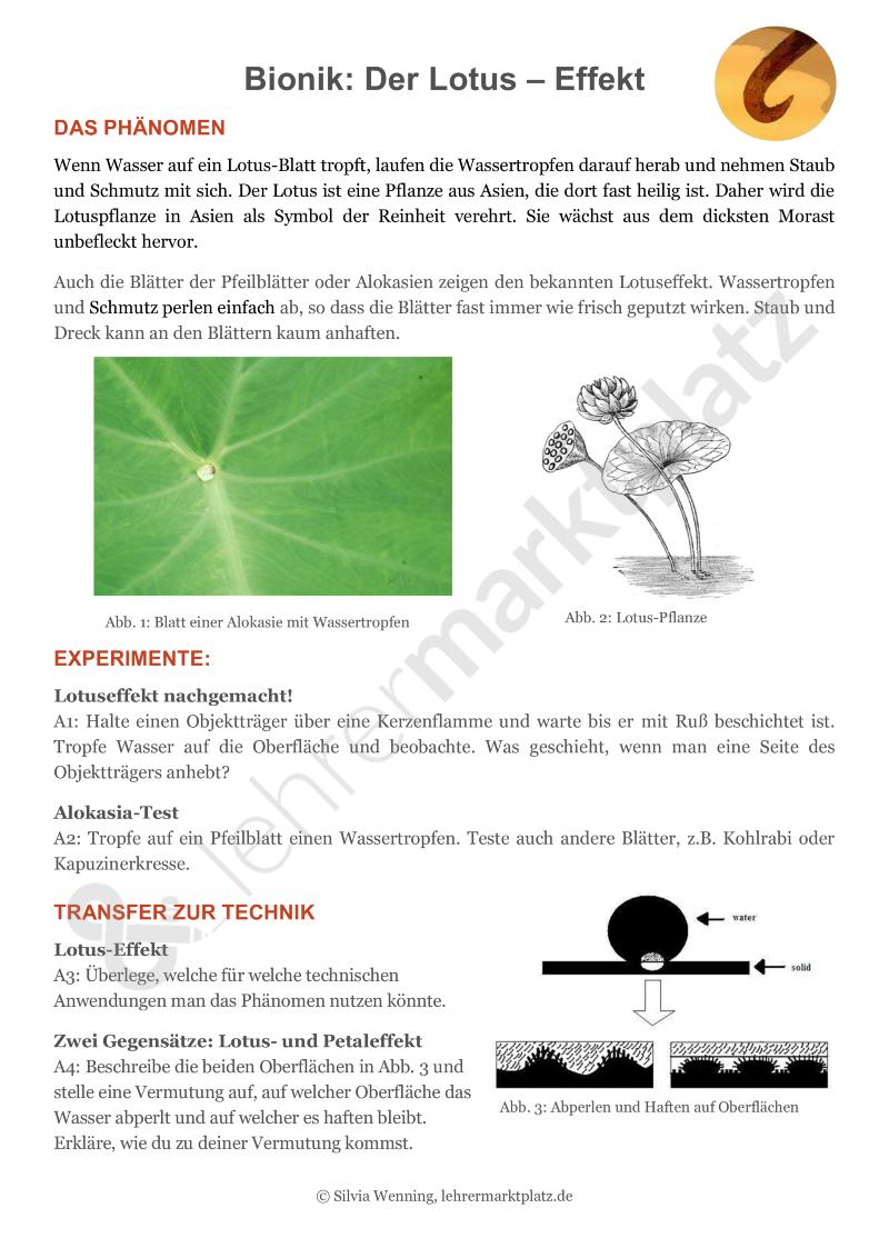 Bionik - 4 Innovative Und Experimentelle Aufgaben Und Lösungen Als ... Pflanzen Fur Frische Luft Nutzen