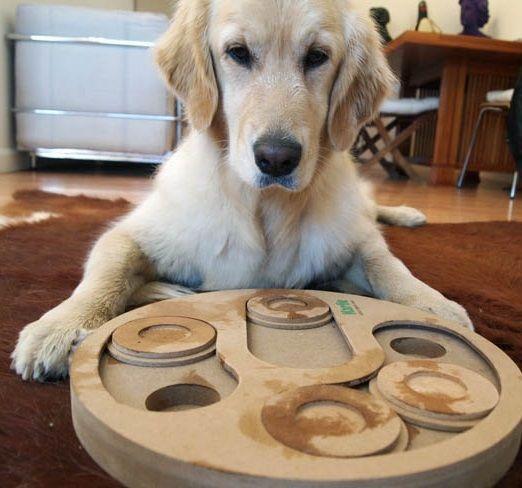 Descubre Los Mejores Juegos De Inteligencia Para Perros Wakyma Perros Razas De Perros Mascotas