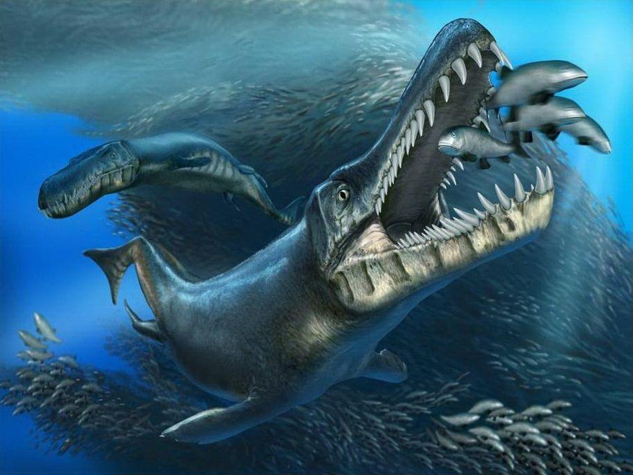 Neptunidraco ammoniticus • the Oldest known Metriorhynchid ...