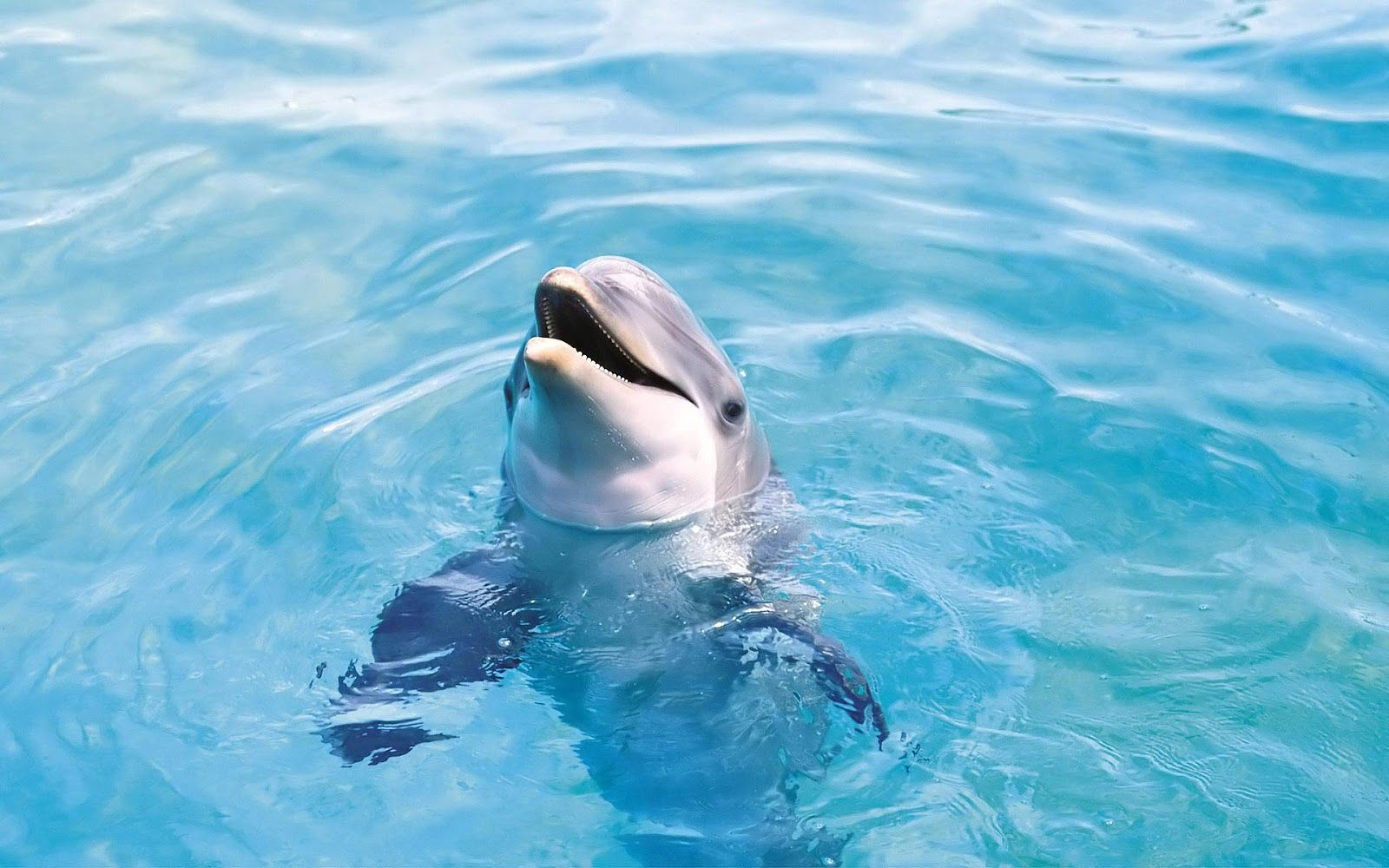 HD Dolphins Wallpapers And Photos Animals Dolphin Pictures