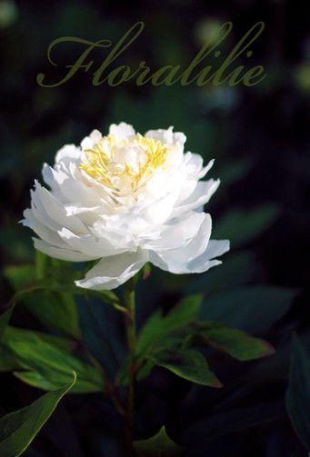 Wafer Paper Peony | Floralilie Sugar Art