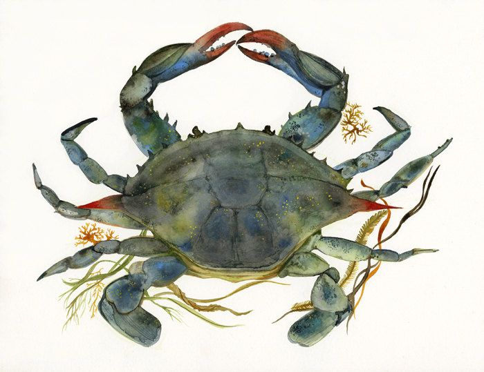 Crab Watercolor Crab Art Beach House Decor Blue Crab Print Ocean