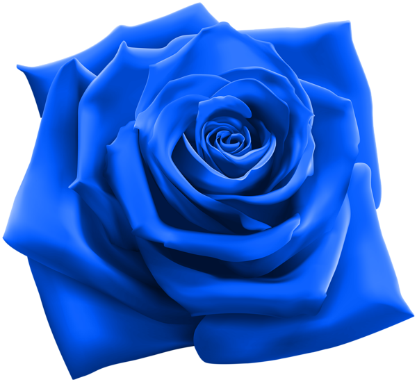 Blue Rose Rose Vine Tattoos Rose Clipart Red Rose Png