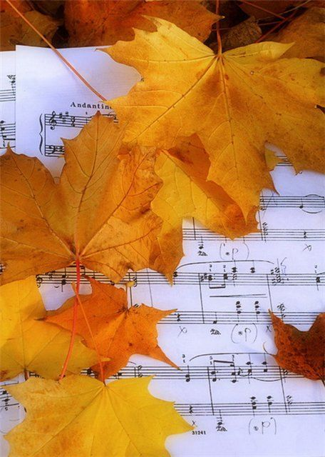 leaves on sheet music.