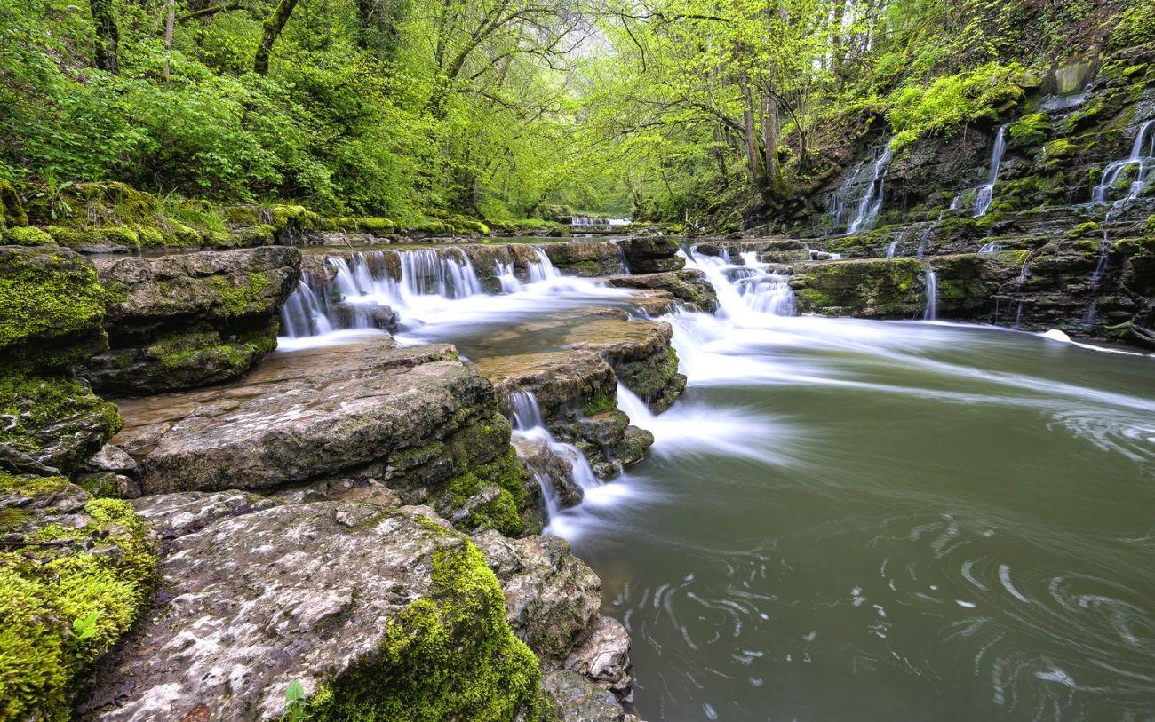 Download Nature Forest Trees Rock River 2k 4k Wallpaper