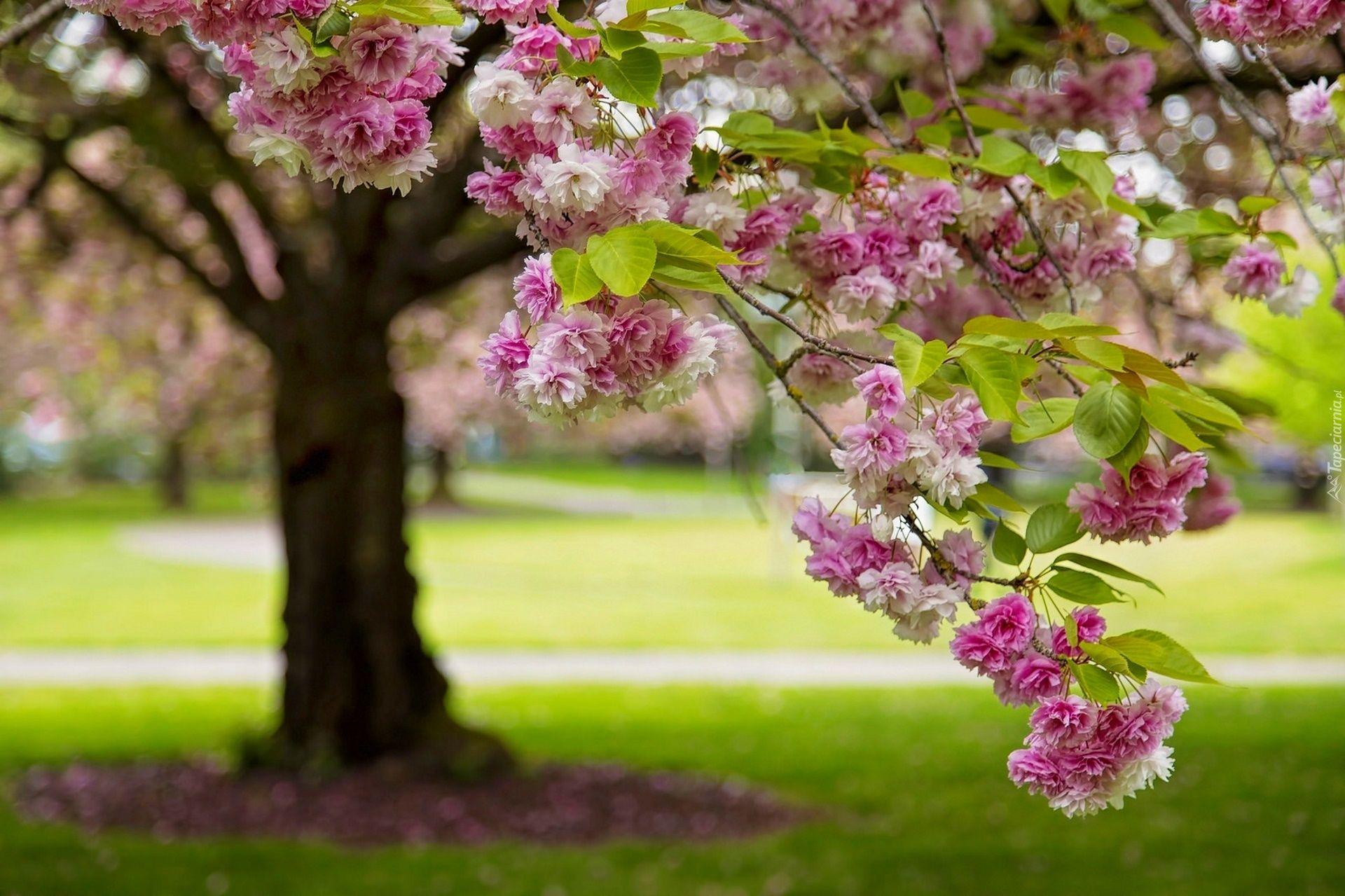 Wiosna Flowers Wallpaper Plants