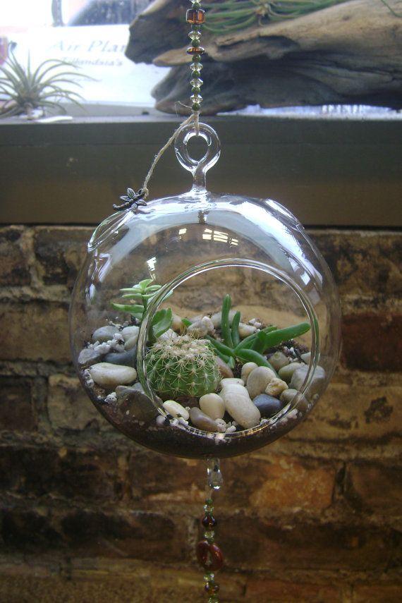 Hanging Cactus Terrarium By Graciebellasboutique On Etsy 23 95