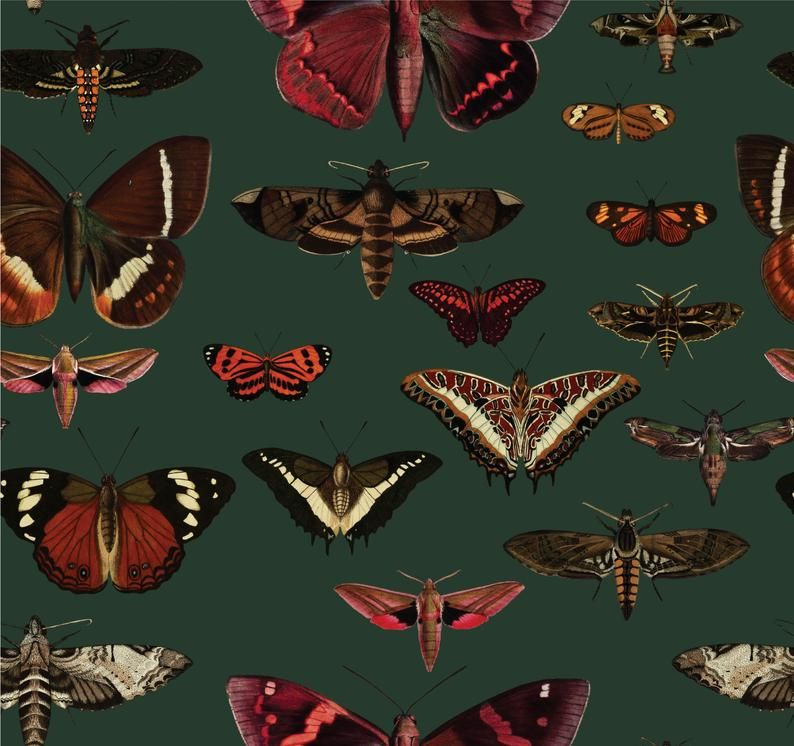 removable vintage wallpaper, butterflies pattern, dark green background, unique graphics, botanical, living room decor || #1