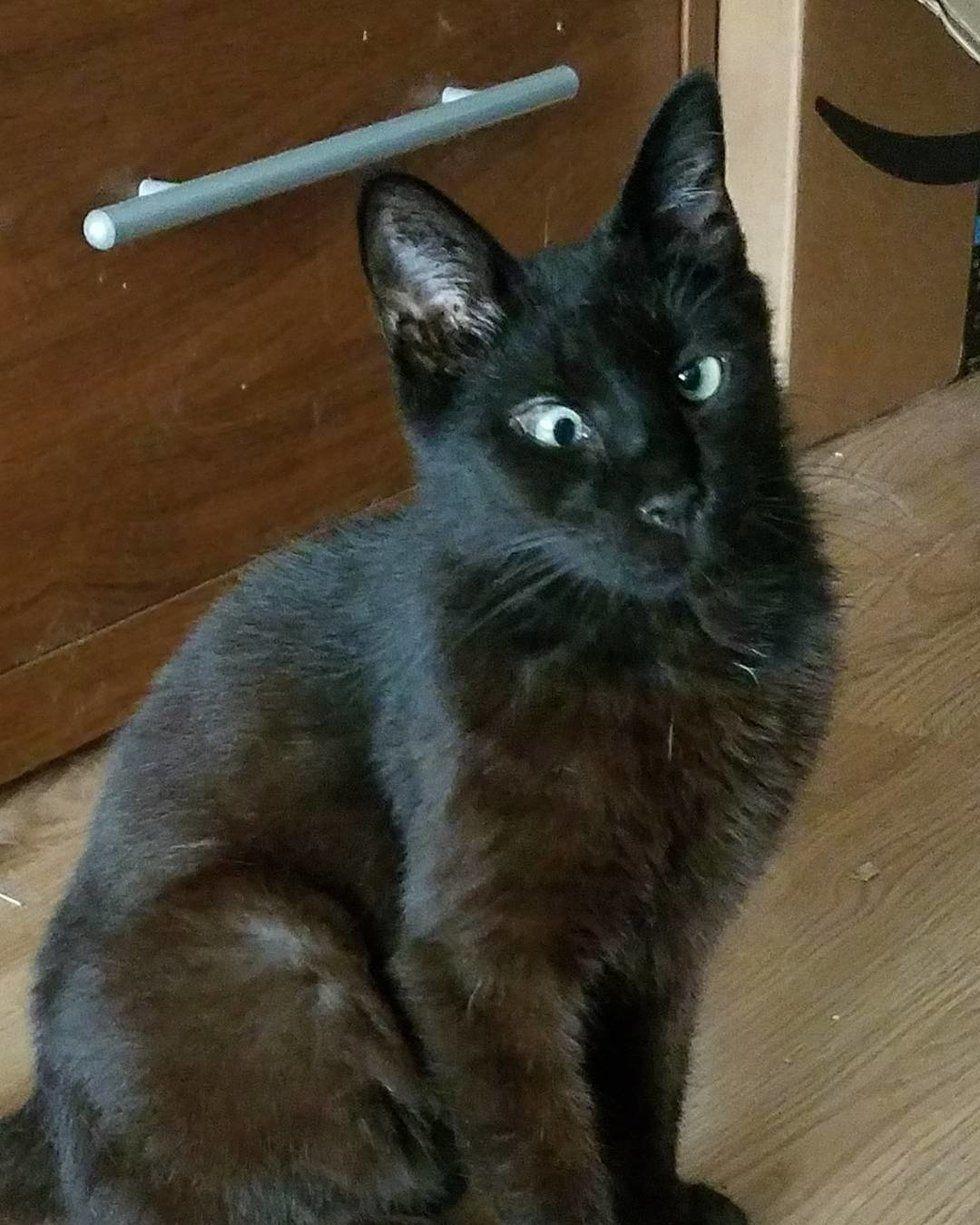 Pin by Cathy York on Cats Cats, Stray cat, Cross eyed cat
