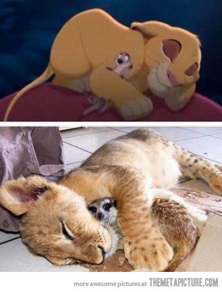 Real Simba and Timon...awww!