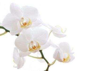sitbru white flower background white flower pinterest