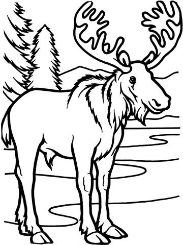 Moose Bull Coloring Page From Moose Category Select From 25529