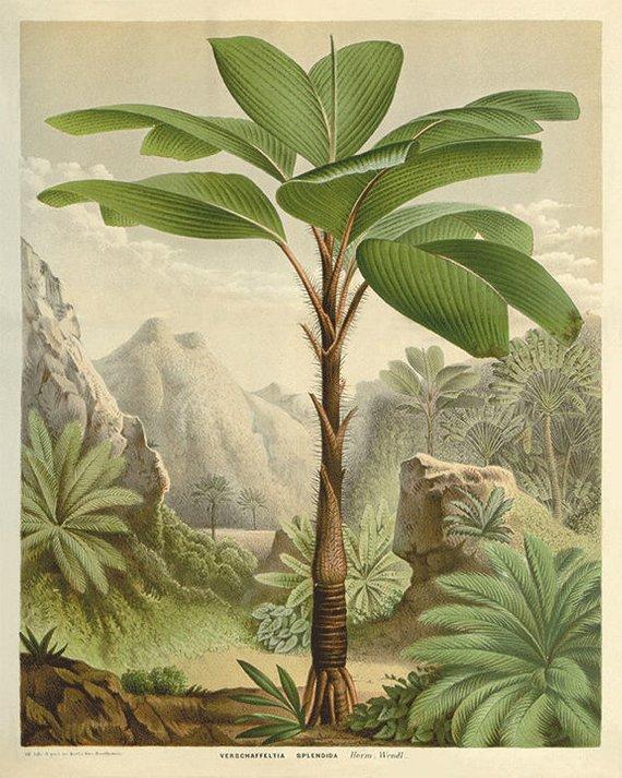 1845 Flore Des Serres Lithograph Objective Van Houtte Orchid