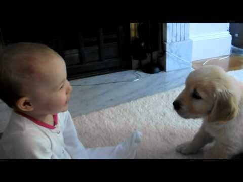 Baby And Puppy Meet For The First Time Xd Videos Pinterest