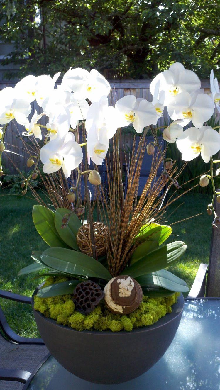 entretien des orchid es savoir tout sur ces fleurs exotiques mousse vegetale orchid es. Black Bedroom Furniture Sets. Home Design Ideas