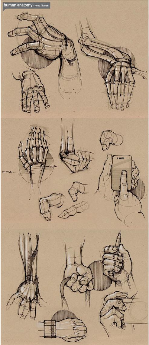 Pin by Veronika on рисование / art   Pinterest   Anatomy, Drawings ...
