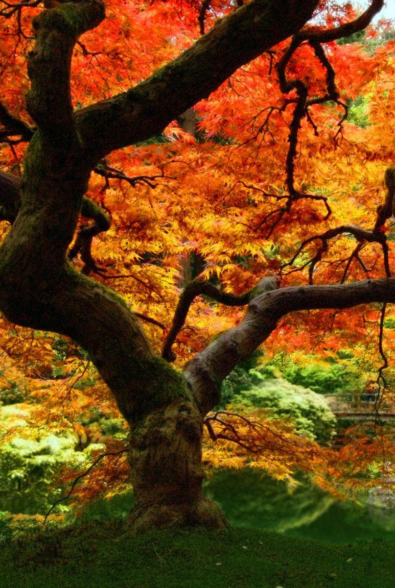 #iPhone #wallpaper #autumn | Outdoor, Nature, Outdoor decor