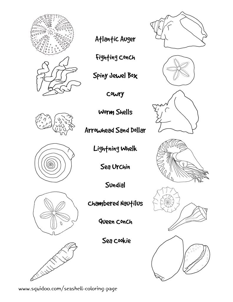 Free printable coloring pages names - Seashells And Marine Life Matching Worksheet With Pictures Of Sea Creatures To Match With Their Correct Names Answer Sheet Available Also Free For