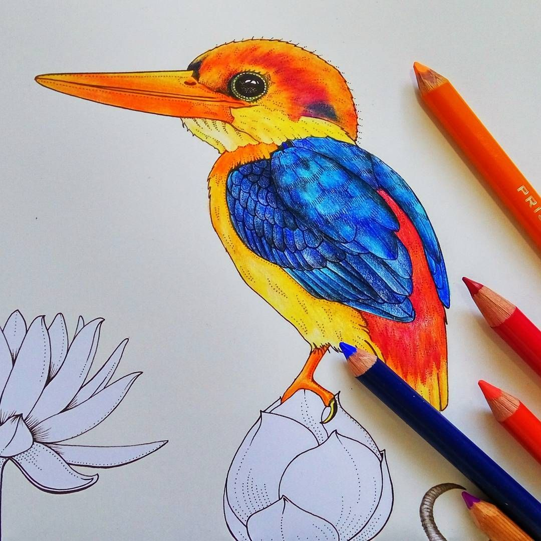 The oriental kingfisher in his glorious natural colour for Oriental colour palette