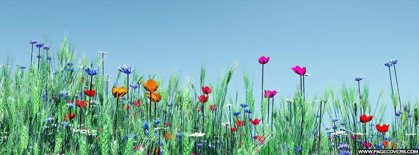 flores de primavera cubierta sunny day