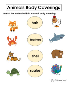 Animals Body Coverings