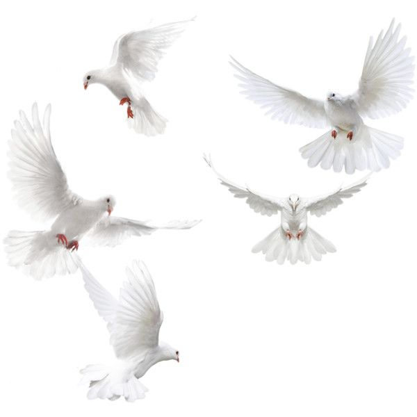 Flying Birds 7 Png Liked On Polyvore Featuring Animals White Doves Birds Flying Pigeon Pictures