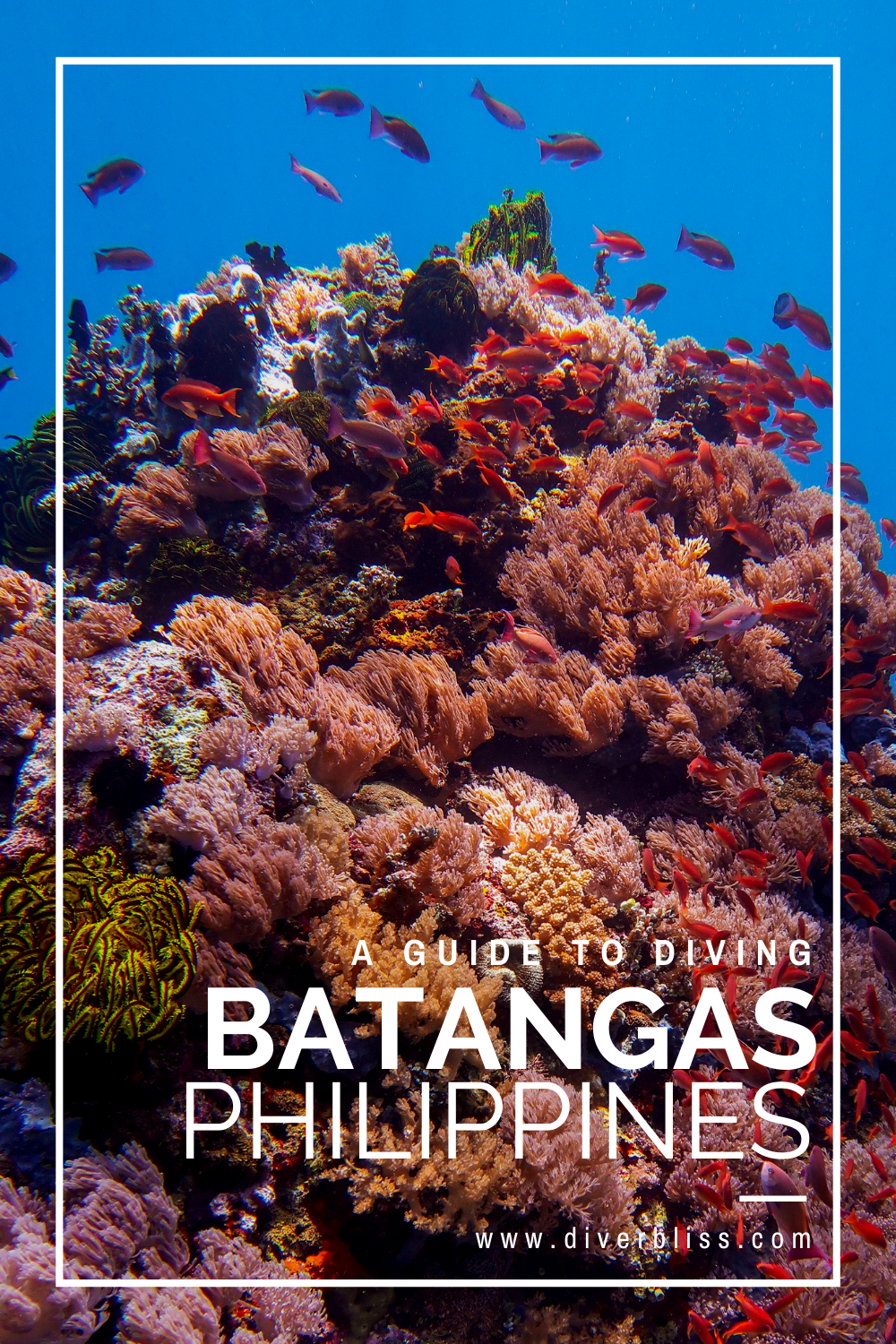 A Guide To Scuba Diving In Anilao Batangas Philippines A First Timer S Guide To Scuba Diving In Anilao Batan In 2020 Scuba Diving Philippines Batangas Philippines