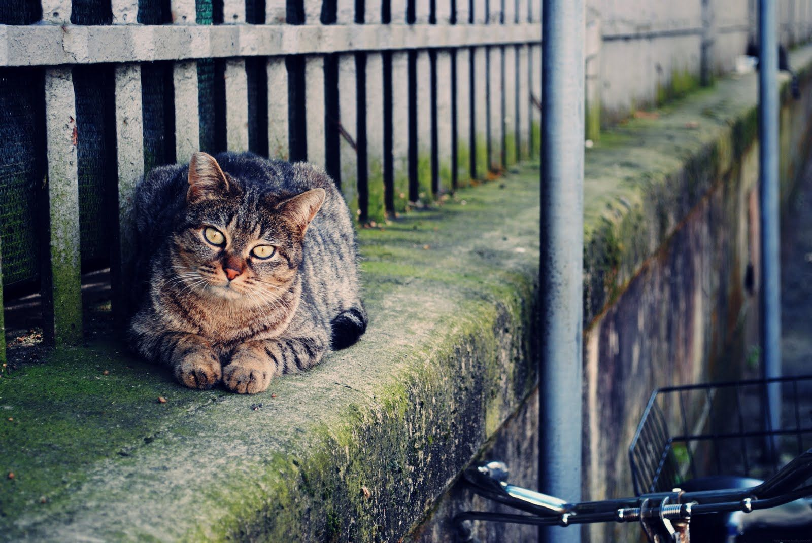 Kitty Cat Firenze Italy Travel Seasage Seasageblog Cats Cool Cats Kitty