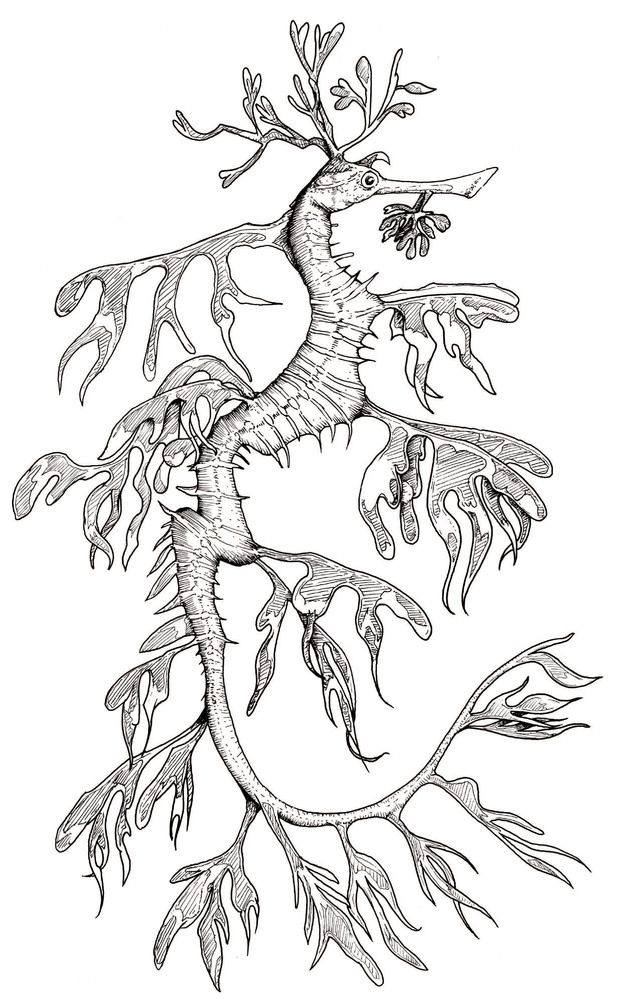 A Leafy Seadragon From The Ocean Around Australia Do You Have Zoo