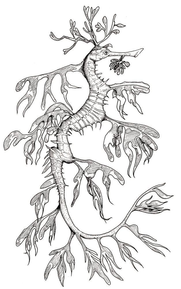 Sea Dragon Drawing : dragon, drawing, Leafy, Dragon, Creatures, Seahorse, Tattoo,