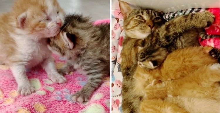 Orphaned Kittens Adopted By Cat Who Was Found In A Box Outside Just Like Them Love Meow Kittens Cats Cats And Kittens