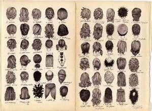 Cute Short Haircuts Hairstyles Names - Bing images | Hair ...