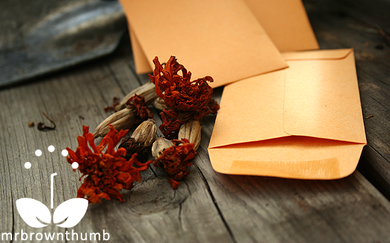 how to store seeds you saved from your garden small coin envelopes